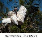 Wood Stork Preening On Branch