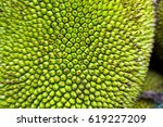 Closeup On A Jackfruit ...