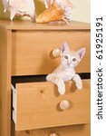 Stock photo ginger kitten peeks out of the drawer cabinet 61925191