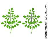 moringa oleifera  medicinal... | Shutterstock .eps vector #619258394