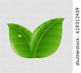 green leaves  | Shutterstock . vector #619312439