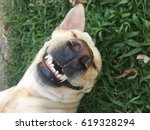 Stock photo smiling dog 619328294