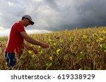 A Farmer Analyzes The Soya...