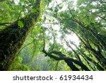 rainforest  intanon national... | Shutterstock . vector #61934434