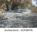 forest after fire - stock photo