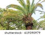 palm tree in jeju island   Shutterstock . vector #619390979