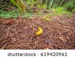 Slug Creeps On A Footpath....