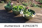 Small photo of Wild meadow herbs ready for spring salad. Aegopodium, Plantago Taraxacum, Bellis. The leaves of dandelion and plantain, nettle flowers and daisies in ceramic bowls on a wooden table in the garden