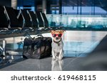 holiday vacation jack russell... | Shutterstock . vector #619468115