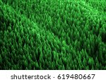 forest of pine trees in... | Shutterstock . vector #619480667