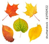 Leaves Collection Isolated On...