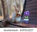 the squirrel sits on a bench... | Shutterstock . vector #619512227
