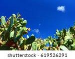 Indian Fig Opuntia  Cactus  ...