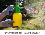 Woman with gloves spraying a blooming fruit tree against plant diseases and pests. Use hand sprayer with pesticides in the garden. - stock photo