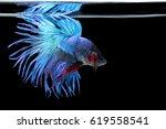 beautiful betta fish    Shutterstock . vector #619558541