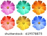 pack of colored primula flowers ... | Shutterstock . vector #619578875