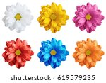 pack of colored gerbera flowers ... | Shutterstock . vector #619579235