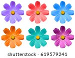 pack of colored primulf flowers ... | Shutterstock . vector #619579241