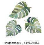 leaves of exotic tropical plant ... | Shutterstock . vector #619604861