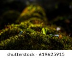 Mossy Log Covered With Leaves...