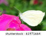 White Butterfly Macro On Pink...