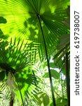 green feeling    Shutterstock . vector #619738007