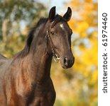 Dark Horse In The Autumn...