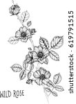 drawing flower. wild rose clip... | Shutterstock .eps vector #619791515