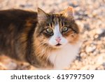 concept of homeless animals  ... | Shutterstock . vector #619797509