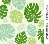 green monstera tropical leaf...   Shutterstock .eps vector #619830911