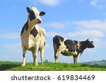 british friesian cow against... | Shutterstock . vector #619834469