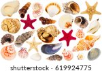 Beautiful Seashells Collection...