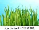 Close Up Of Light Green Grass...