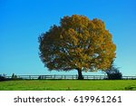 Old Oak  Tree In Autumn
