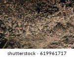 cherry trees at evening | Shutterstock . vector #619961717