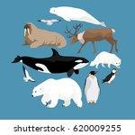 polar animals circle set with... | Shutterstock .eps vector #620009255