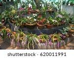 orchid park | Shutterstock . vector #620011991