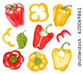 watercolor marker illustration... | Shutterstock . vector #620069861