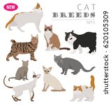 cat breeds icon set flat style... | Shutterstock .eps vector #620105309
