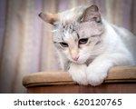 beautiful cute white funny cat... | Shutterstock . vector #620120765