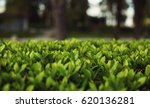 Small photo of Quickset of a park in spring time, fresh green leafs in focus.