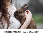 Stock photo rabbit girl holding a real lop eared rabbit and posing with it on camera girl playing with grey 620157389