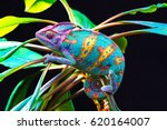 Yemen Chameleon Isolated On...