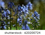 blue flowers | Shutterstock . vector #620200724
