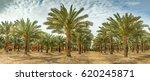 Panoramic Image Of Plantation...