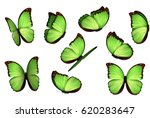 Stock vector set colorful realistic butterflies isolated on white background view insects lepidoptera morpho 620283647