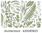 Stock vector set with leaves botanical illustration fern eucalyptus boxwood vintage floral background 620285825