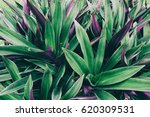 leaves texture background   Shutterstock . vector #620309531