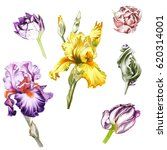 vector flowers irises and tulips | Shutterstock .eps vector #620314001