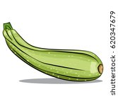 zucchini vector isolated on... | Shutterstock .eps vector #620347679